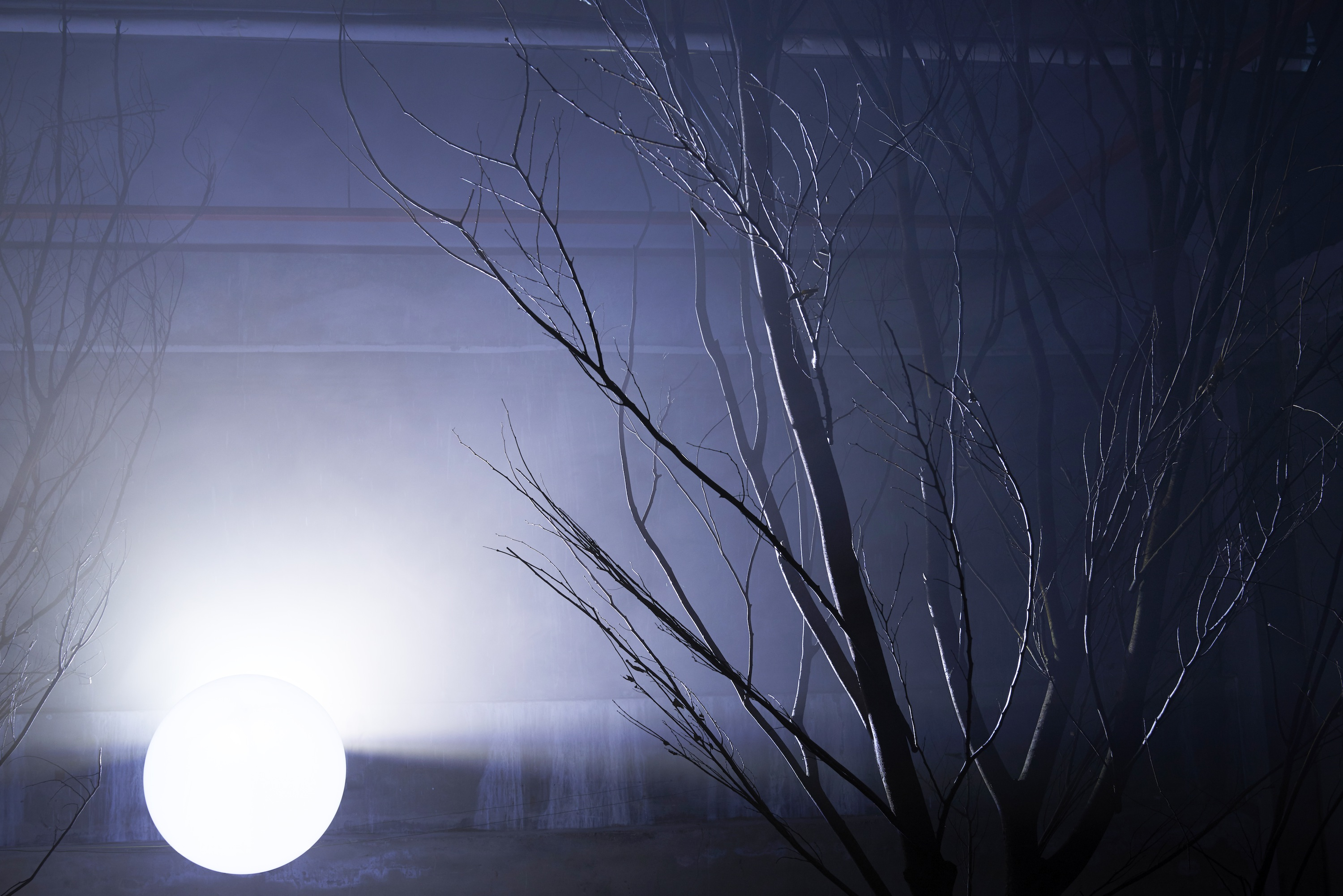 A Singularity (installation) | David Ogle, 2017 | birch trees, acrylic sphere, spotlight, haze machine | installation view: Cheongju, South Korea, 2017 | image: Cheongju Craft Biennale 2017